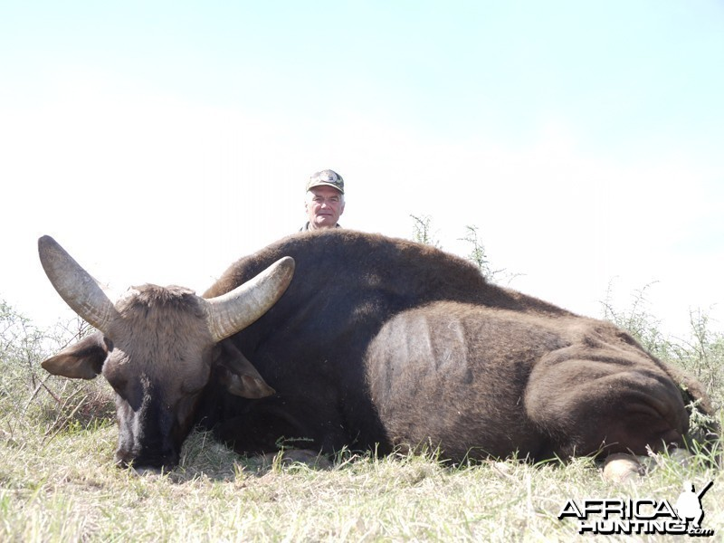 Gaur hunted with Wintershoek Johnny Vivier Safaris