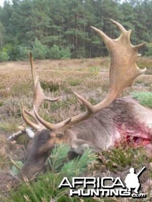 Fallow Deer Rut hunt, Wittgenstein 2008