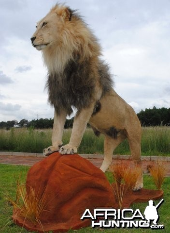 Lion mount by African Memories