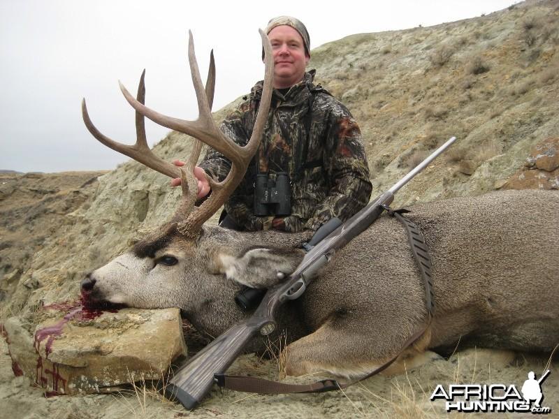 Alberta Mule Deer