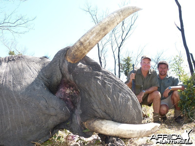 Elephant hunted with Wintershoek Johnny Vivier Safaris