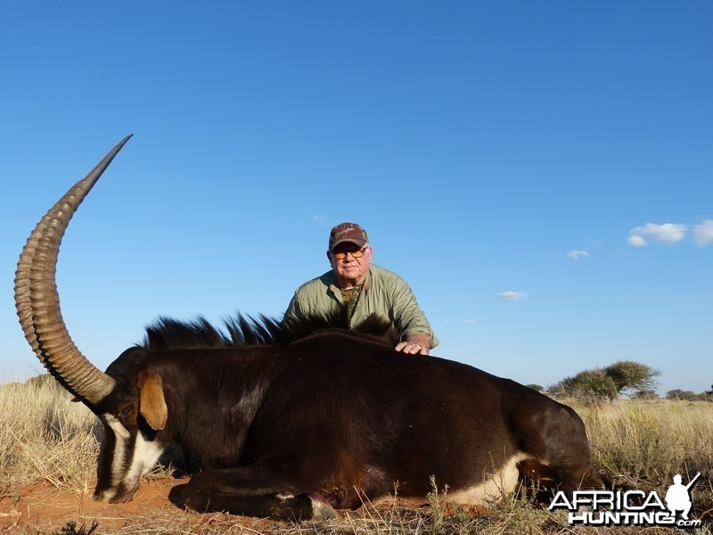 Sable hunted with Wintershoek Johnny Vivier Safaris