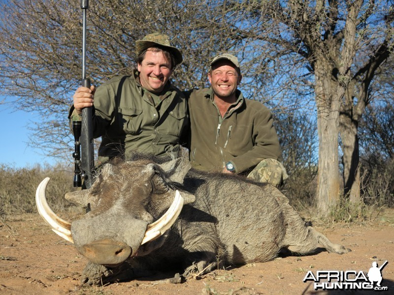 Warthog hunted with Wintershoek Johnny Vivier Safaris