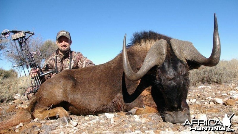 Black Wildebeest hunted with Wintershoek Johnny Vivier Safaris