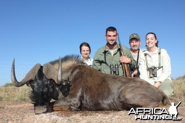 Black Wildebeest Namibia 2012
