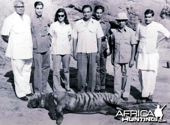 Tiger shoot on River Chambal 1952