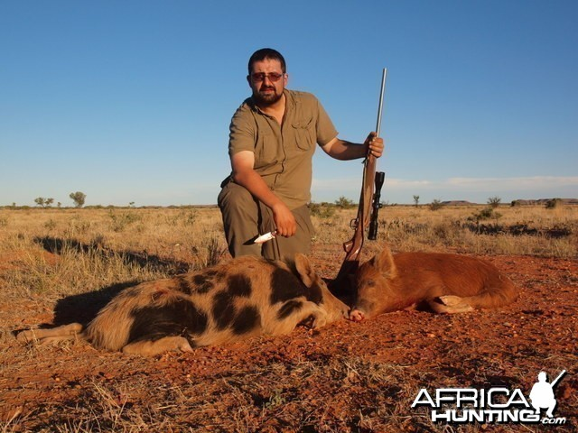 Hunting Feral Pigs in the Australian Outback