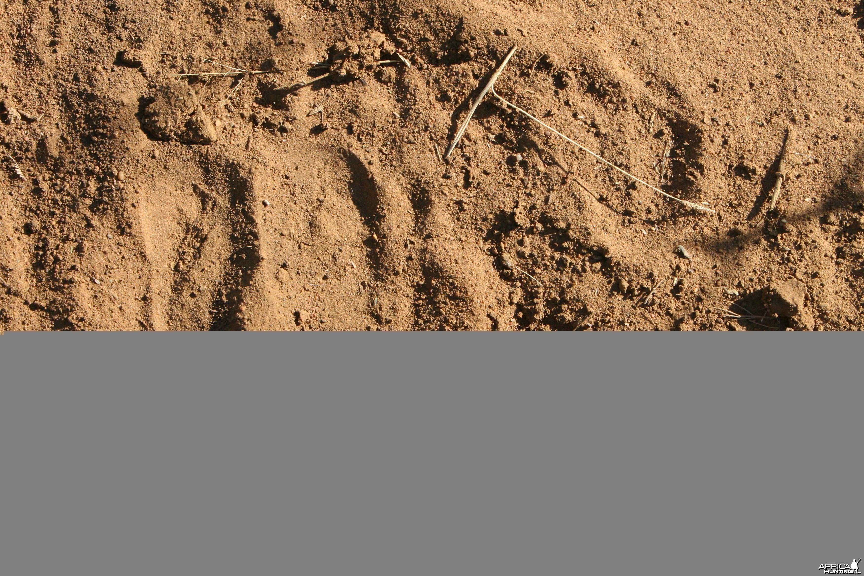 Eland Track