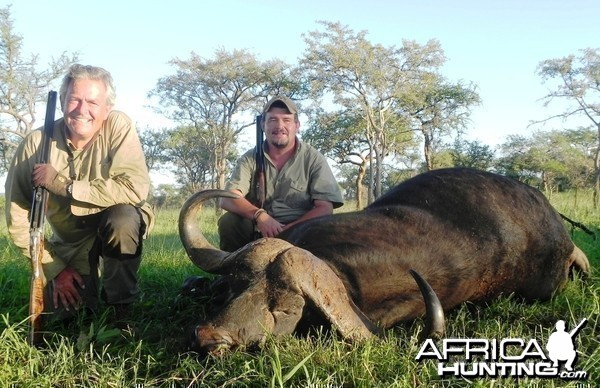 Massailand Buffalo