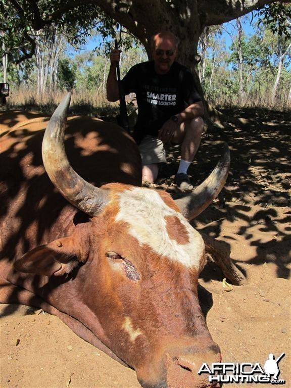 Scrub bull