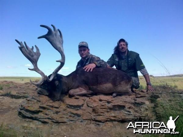 28.5 Black Fellow Deer