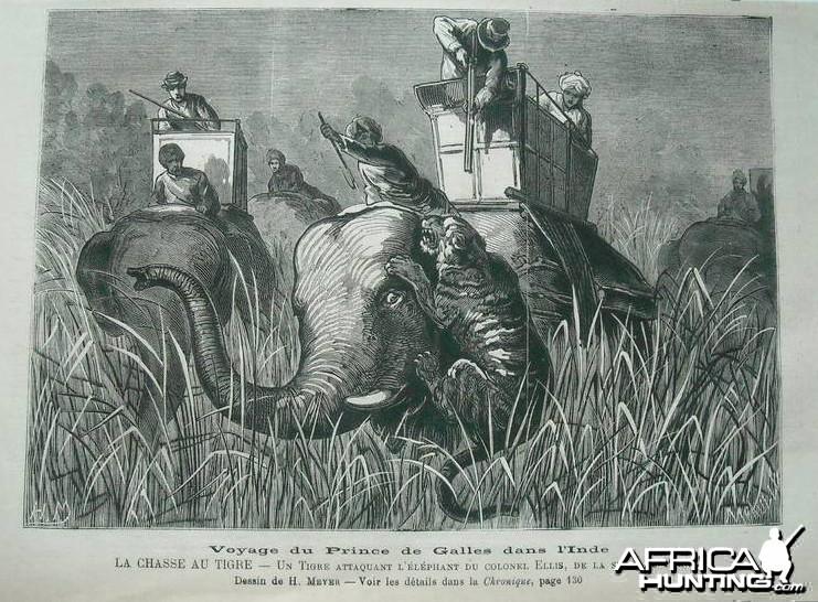 1876 Tiger Hunt India