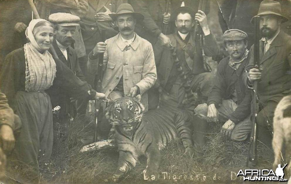 Circus Tiger shot in France