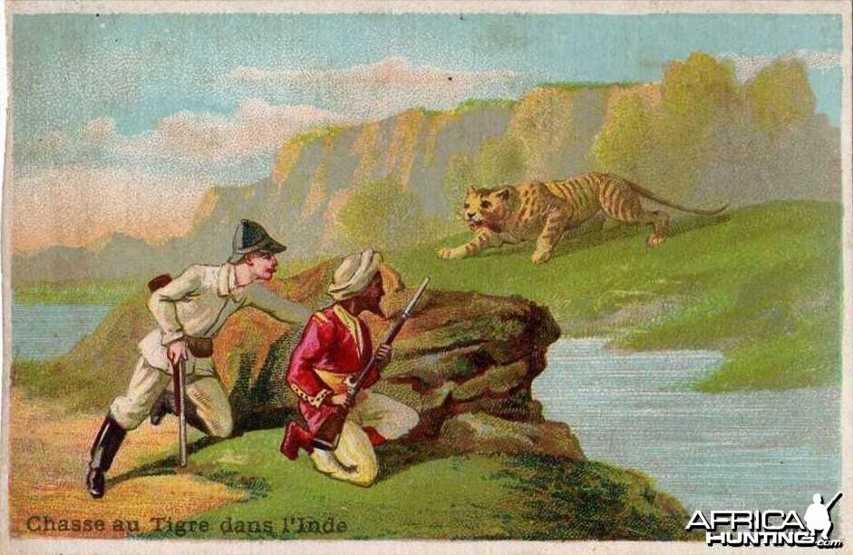 India Hunting Tiger