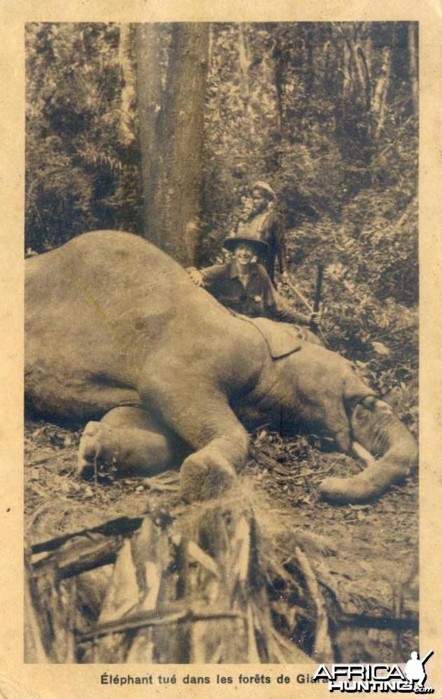 Hunting Elephant