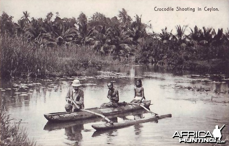Crocodile Shooting Ceylon