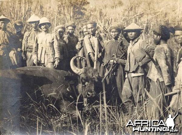 Hunting Gaur
