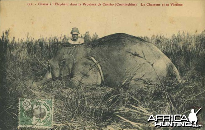 Hunting Elephant Indo China 1911