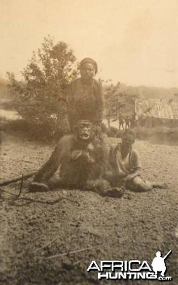 Chimpanzee Congo