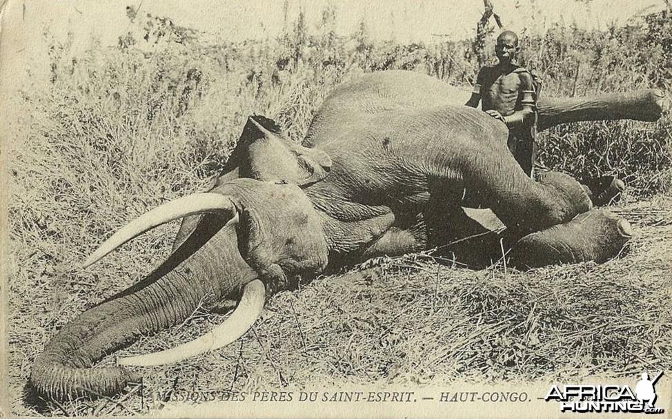 Elephant Congo