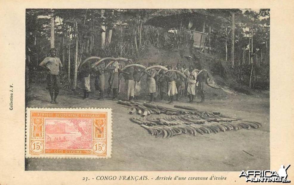Tusks Congo