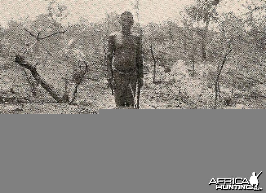 Hunting Buffalo Cameroon