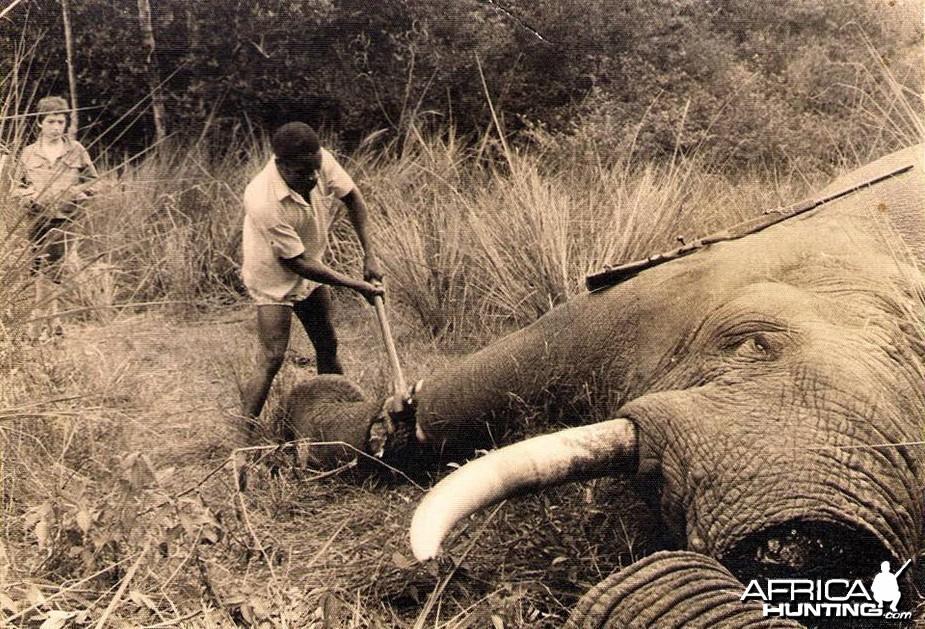 Hunting Elephant 1909