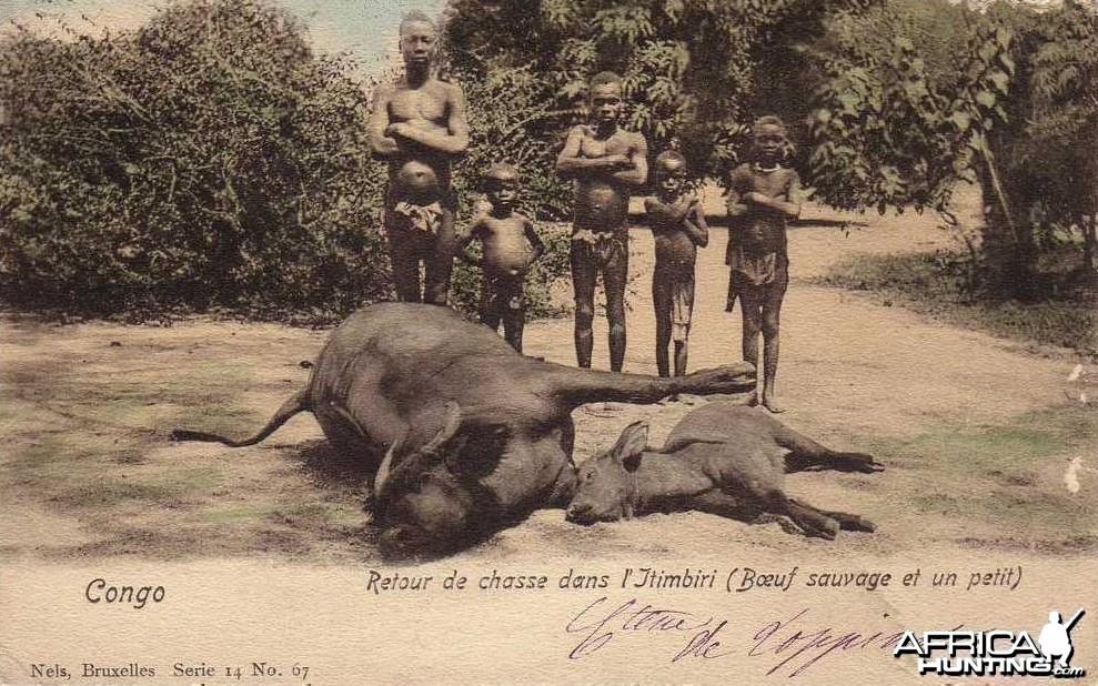 Hunting Buffalo Congo