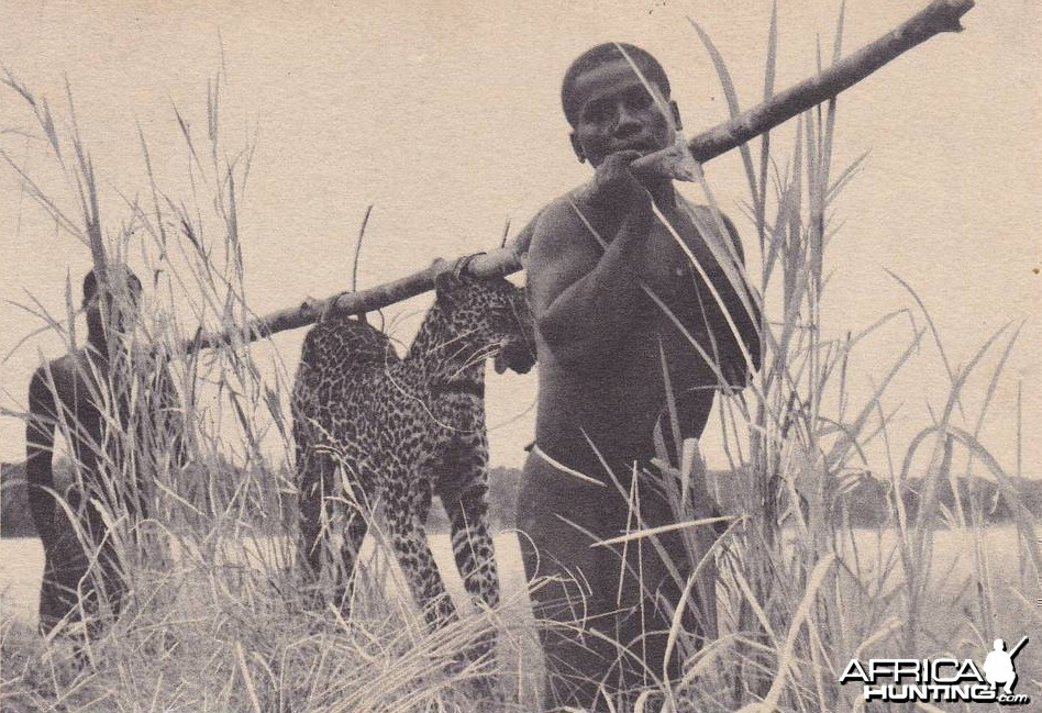 Hunting Leopard Congo