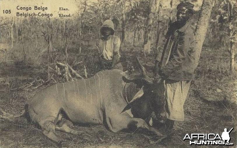 Hunting Eland Congo