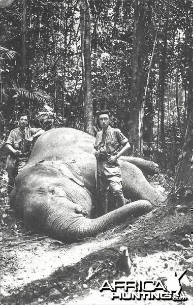Hunting Elephant Malaysia