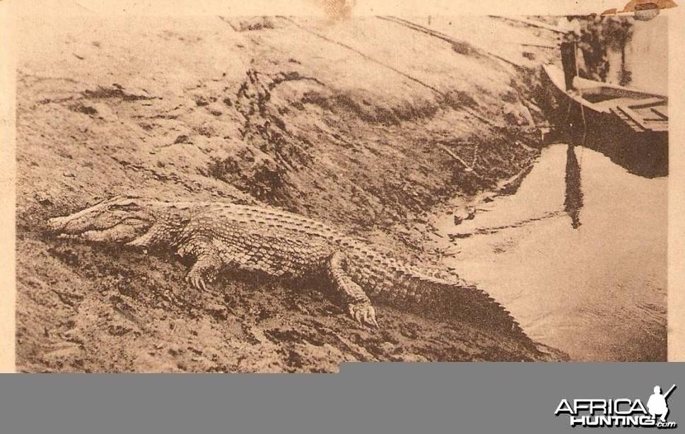 Hunting Croc Angola