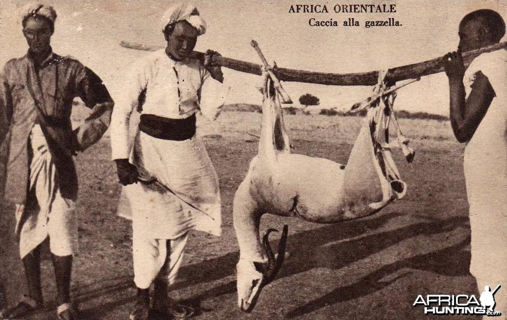 Hunting Gazelle
