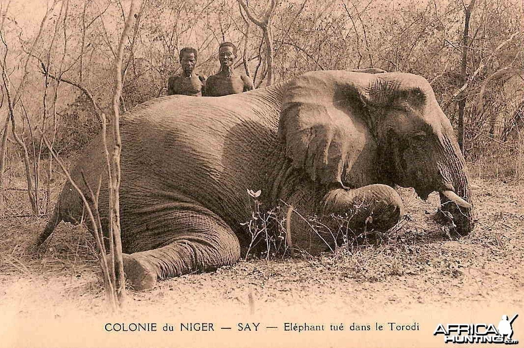 Hunting Elephant Nigeria