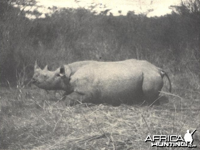 Hunting Rhino