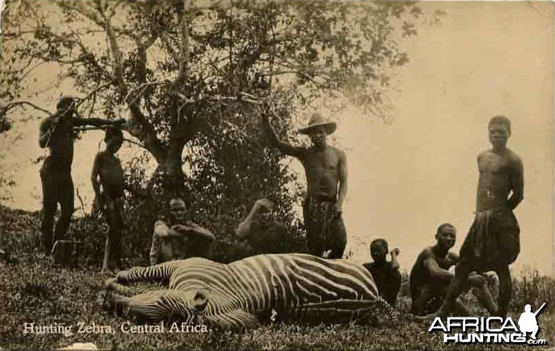 Hunting Zebra
