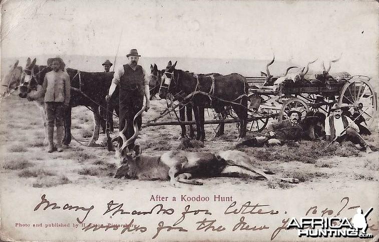 Hunting Kudu