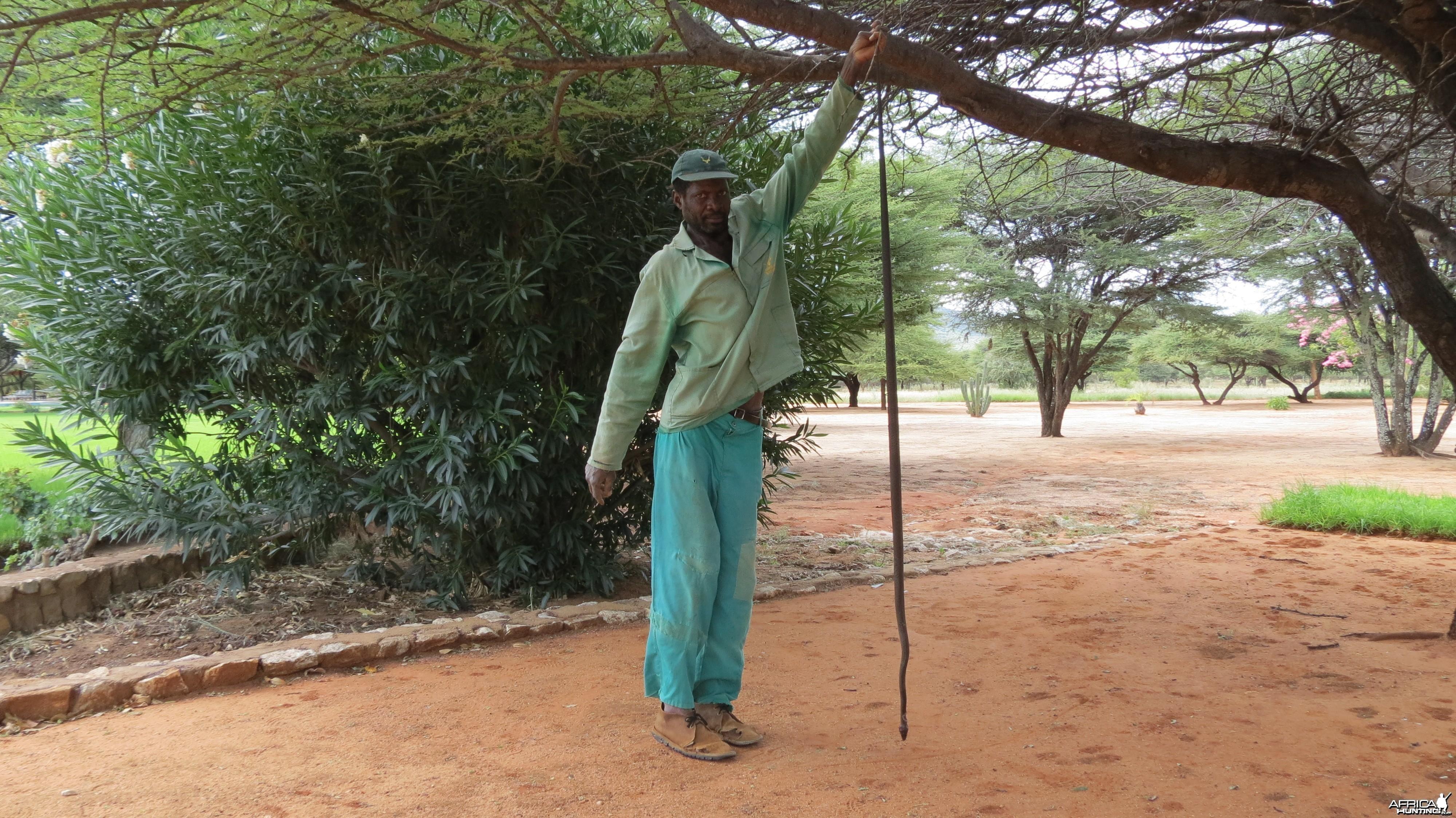 Black Mamba Namibia