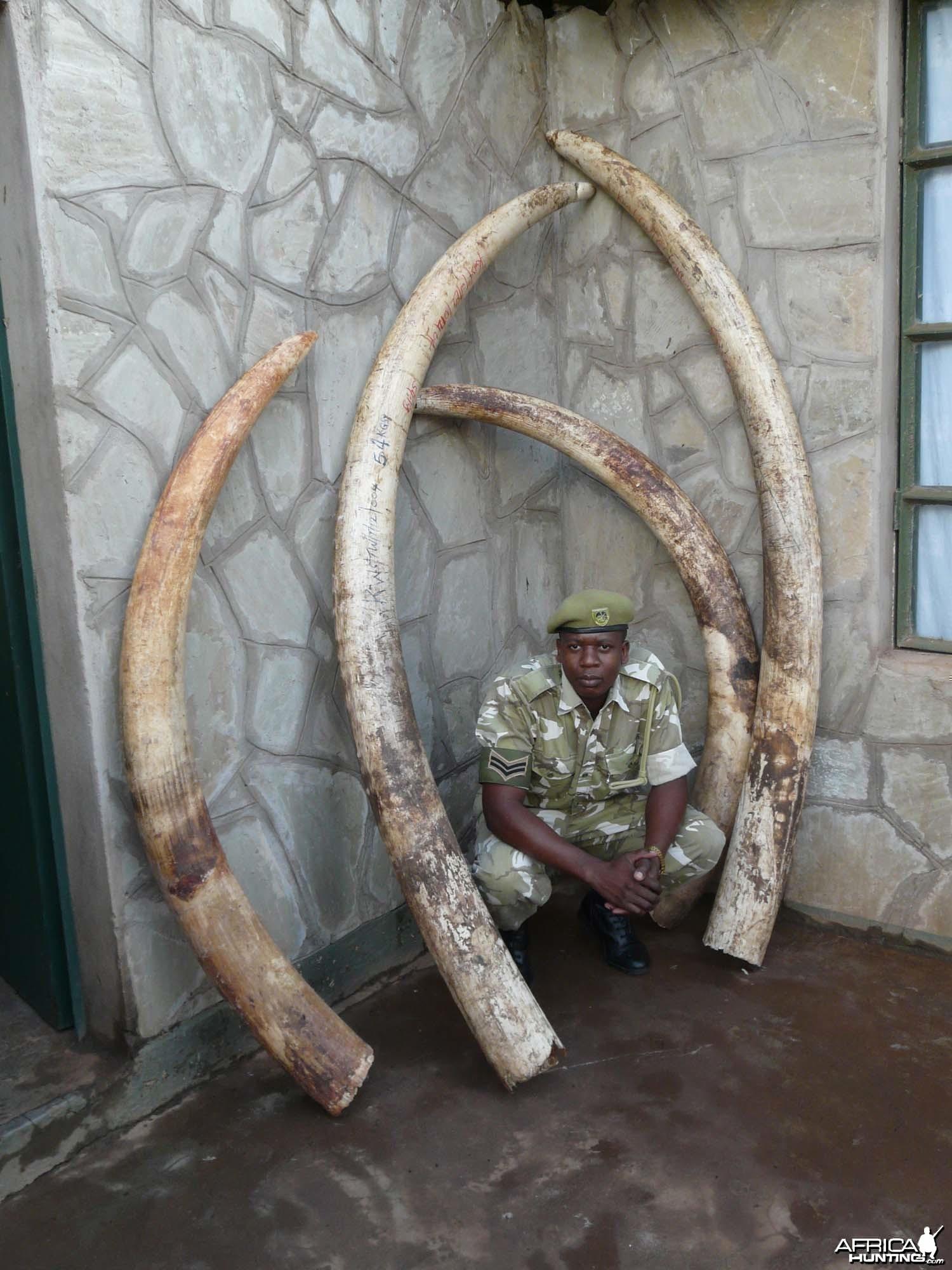 Big Ivory