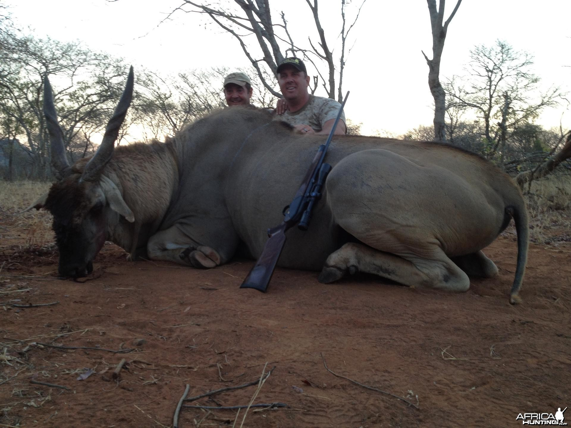 Old Livingstone Eland Bull from Zimbabwe