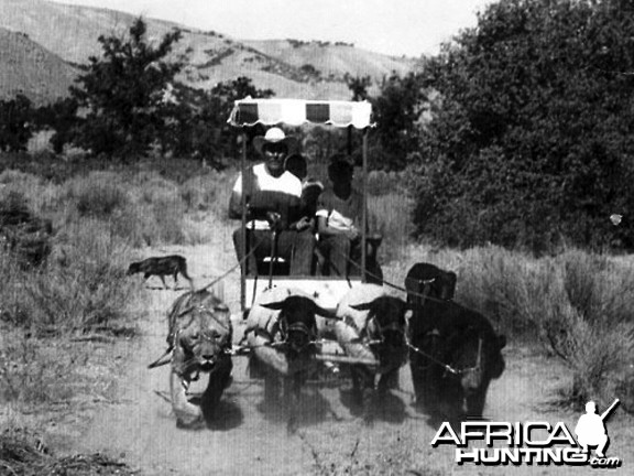 Lion, Bear and Sheep pulling wagon