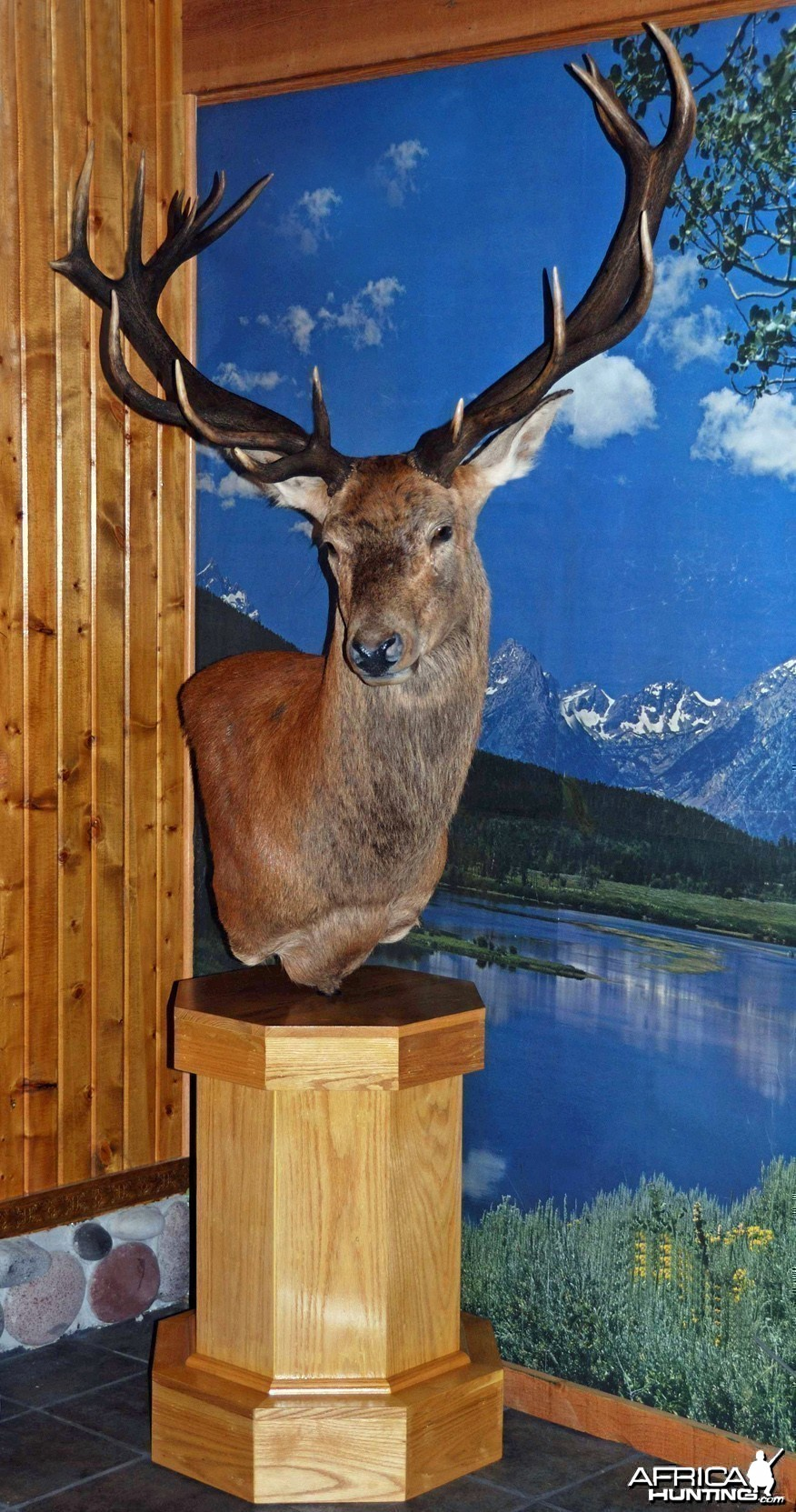 Red Stag mounted