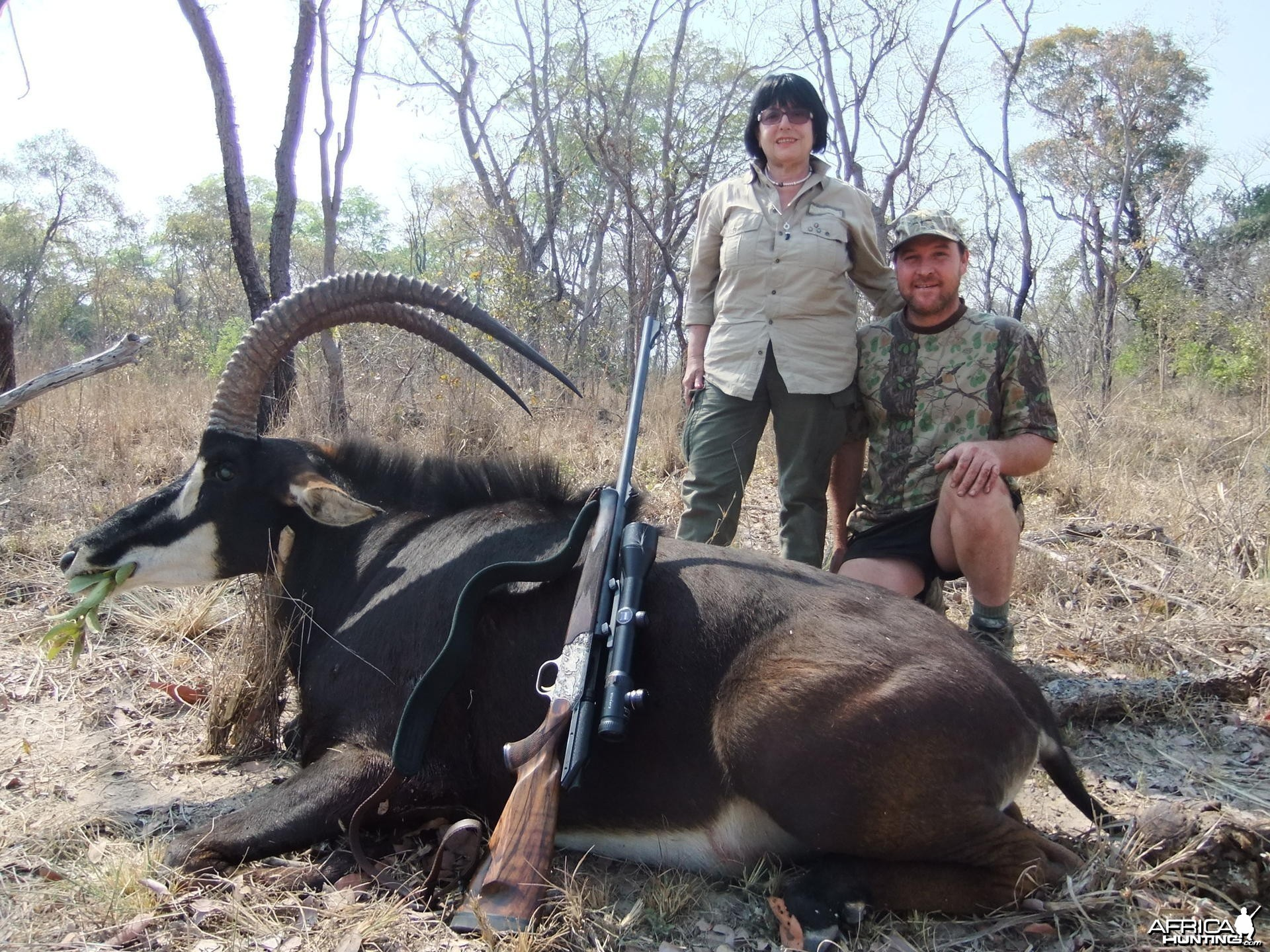 Sable hunted with Balla-Balla Safaris in Zambia