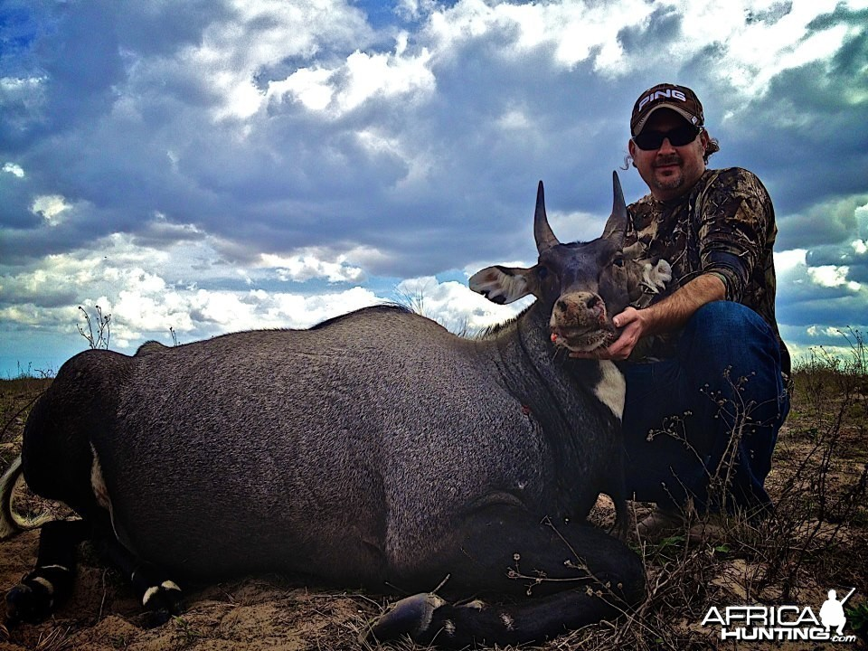 Happy Client with Nilgai