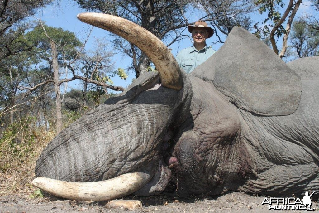 Caprivi Trophy Elephant Bull