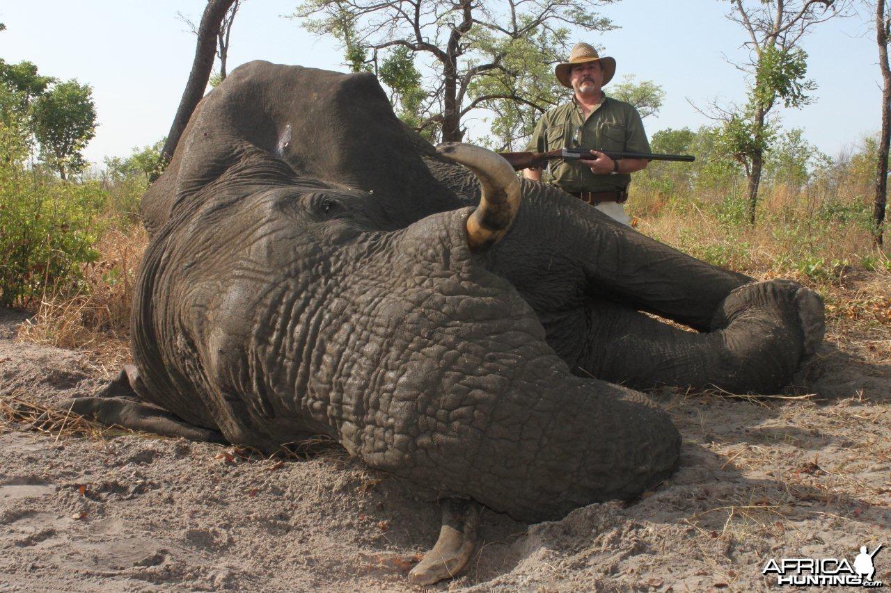 Kavango (Namibia) Elephant Bull