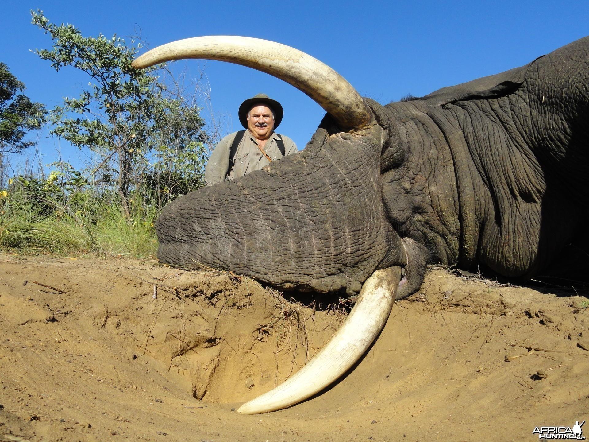 Elephant Zimbabwe