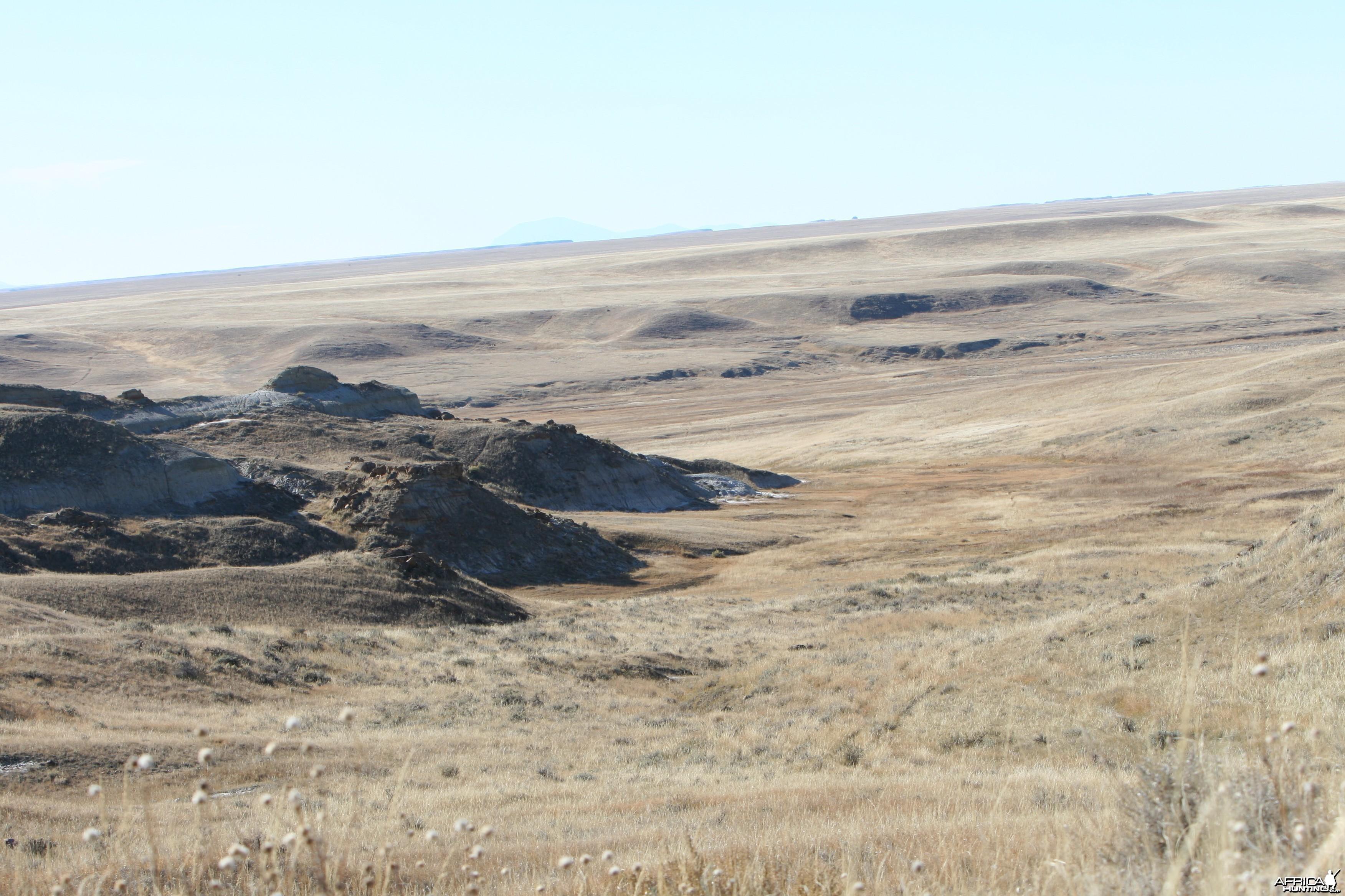 Prairie Draw