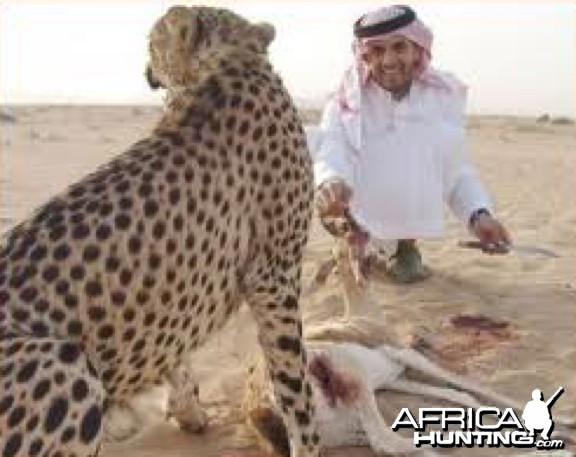 Hunting with Cheetah