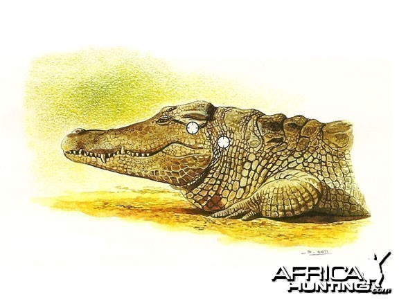 points vitaux chasse crocodile